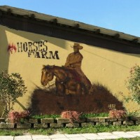 Forlani Horses Farm
