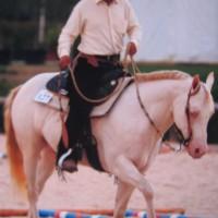 Agricola Elder Tree Quarter Horses