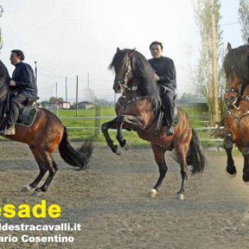 Centro Equestre Village Roller Horse