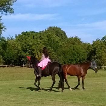 Centro Equestre Arioso