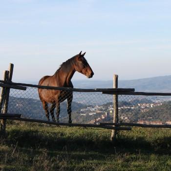 A.S.D Centro Equestre Ambasciador
