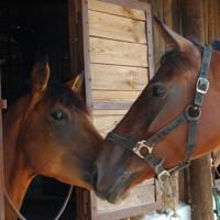 Agriturismo La Fattoria Pony Ranch