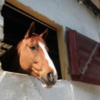Horse Club Rapallo