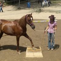 A.s.d. Equitazione Naturale Serenity