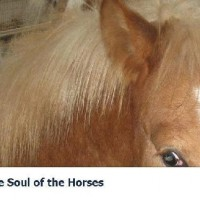 The Soul Of The Horses