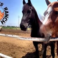 Wild horses ranch
