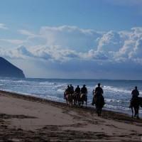 Sea Horse Club