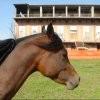 JOLLY HORSE MANEGGIO