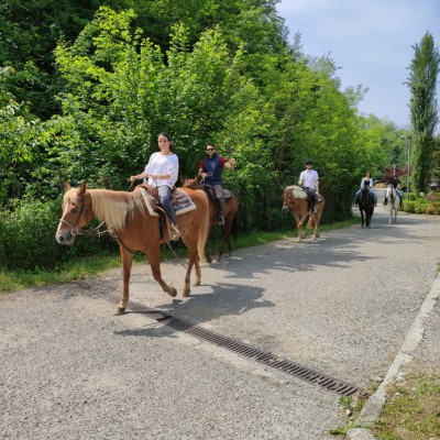 Mimosa Horse Ranch