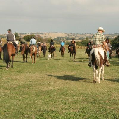 Sporty Farm