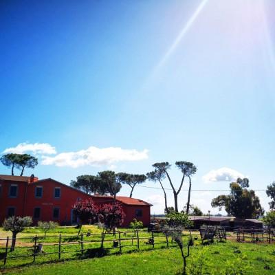 Azienda agricola Hipparkiko's