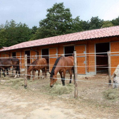 Asd Savvy Horse