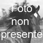 PONY CLUB IL GIROTONDO
